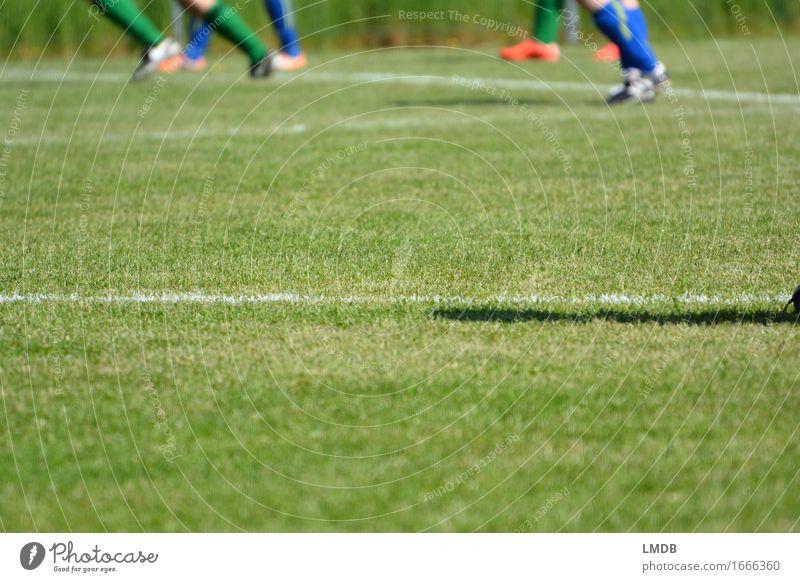 Die Gräser, die die Welt bedeuten I Mensch grün Sport Beine Menschengruppe Fuß Freizeit & Hobby laufen Fußball Sportmannschaft sportlich Sportrasen