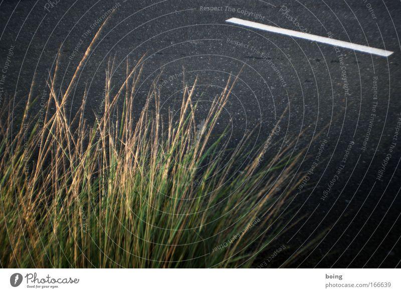 Gras Straße Wärme Schönes Wetter Gartenarbeit nerdig