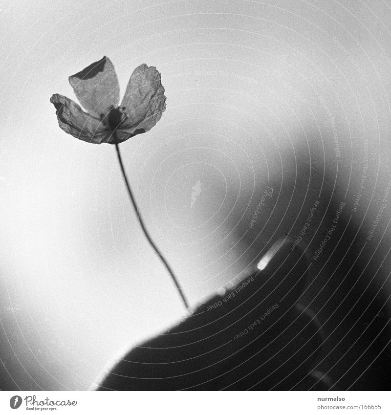 Blümchenradar Natur Hand schön Himmel Sonne Blume Pflanze Freude Tier Glück Park ästhetisch stehen authentisch Lebensfreude fangen