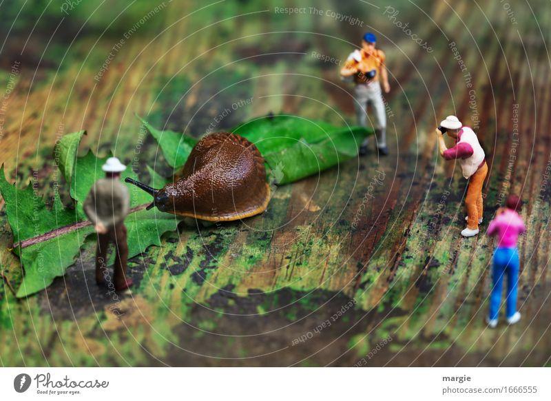 Miniwelten - Besuch im Zoo Mensch Frau Ferien & Urlaub & Reisen Mann grün Blatt Tier Erwachsene feminin Holz braun Tourismus maskulin Wildtier Ausflug Neugier