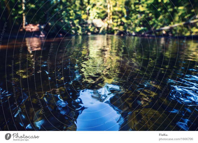 Erfrischung im Sommer Ferien & Urlaub & Reisen Ausflug Umwelt Natur Landschaft Urelemente Wasser Sonnenlicht Schönes Wetter Wald Wellen Bach Fluss nass