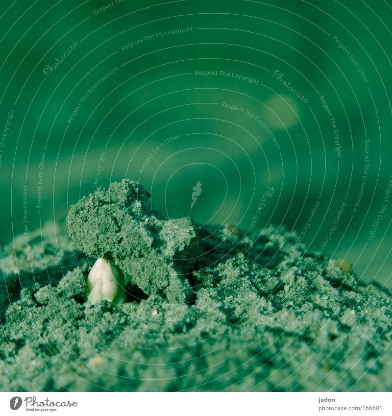 Asaparagus II. Der Durchbruch. Natur Ernährung Erde Wachstum Gemüse Bioprodukte Spargel Durchbruch Durchsetzungsvermögen Spargelzeit Spargelkopf Spargelspitze