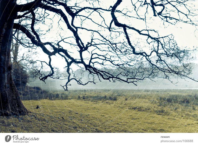 geäst Farbfoto Gedeckte Farben Außenaufnahme Menschenleer Tag Umwelt Natur Landschaft schlechtes Wetter Unwetter Nebel Regen Baum Wiese Feld bedrohlich dunkel