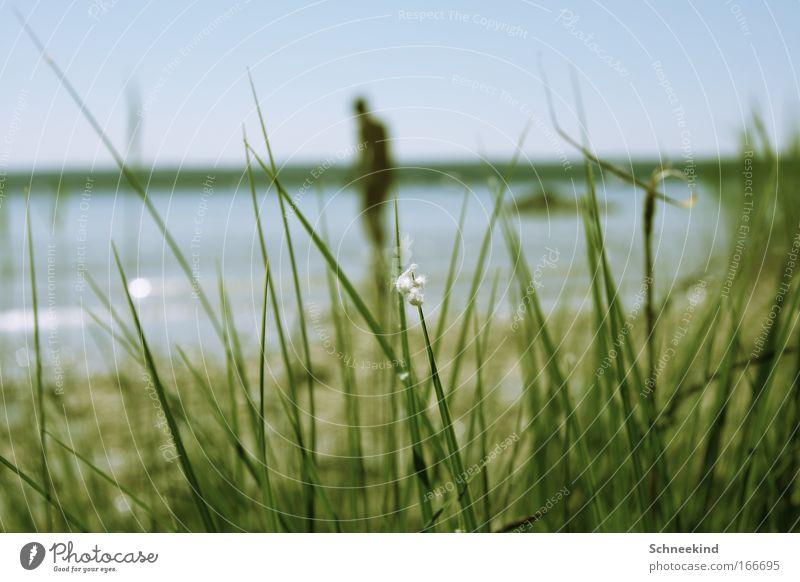 ebenfalls am See Mensch Frau Natur Wasser blau grün Pflanze Sonne Sommer Freude ruhig Erwachsene Erholung Landschaft Gras