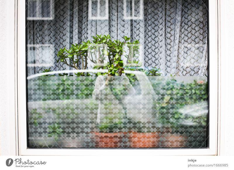 Lebensbaum Lifestyle Stil Häusliches Leben Wohnung Dekoration & Verzierung Fenster Vorhang Sichtschutz Gardine 1 Mensch Grünpflanze Topfpflanze Kleinstadt Stadt