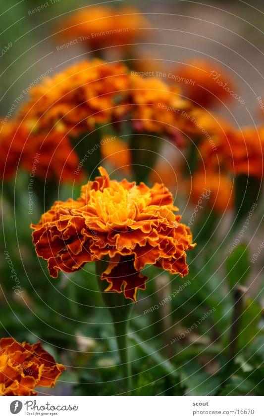 Blumen Blur Pflanze Blüte Garten Natur