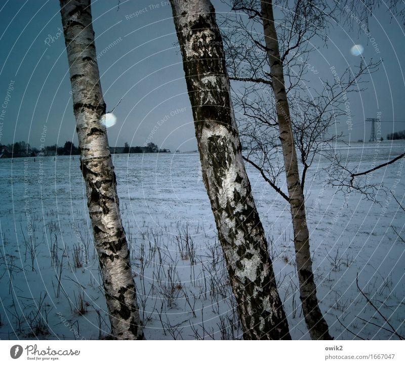 Baumschule Energiewirtschaft Strommast Umwelt Natur Landschaft Horizont Winter Schönes Wetter Eis Frost Schnee Schneefall Sträucher Birke Birkenrinde Baumrinde