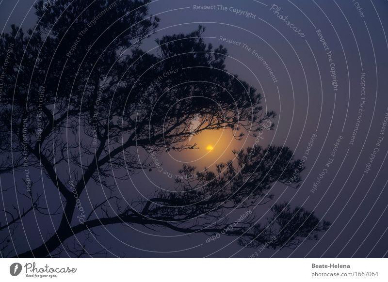 Der Tag erwacht Himmel Natur blau Pflanze Sommer schön Baum Landschaft schwarz Berge u. Gebirge außergewöhnlich Stimmung Kraft gold ästhetisch Beginn