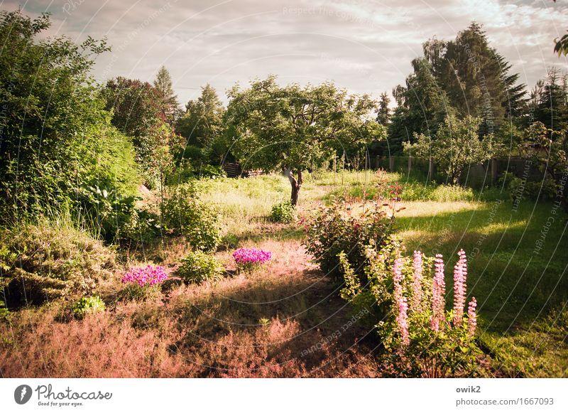 Lauter Blüten Umwelt Natur Landschaft Himmel Wolken Horizont Klima Schönes Wetter Wärme Pflanze Baum Blume Gras Sträucher Blatt Grünpflanze exotisch Lupine