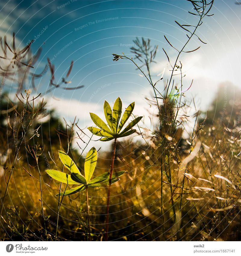 Dschungelcamp Umwelt Natur Landschaft Frühling Klima Schönes Wetter Pflanze Sträucher Blatt Nutzpflanze Garten Wachstum dünn authentisch klein nah unten