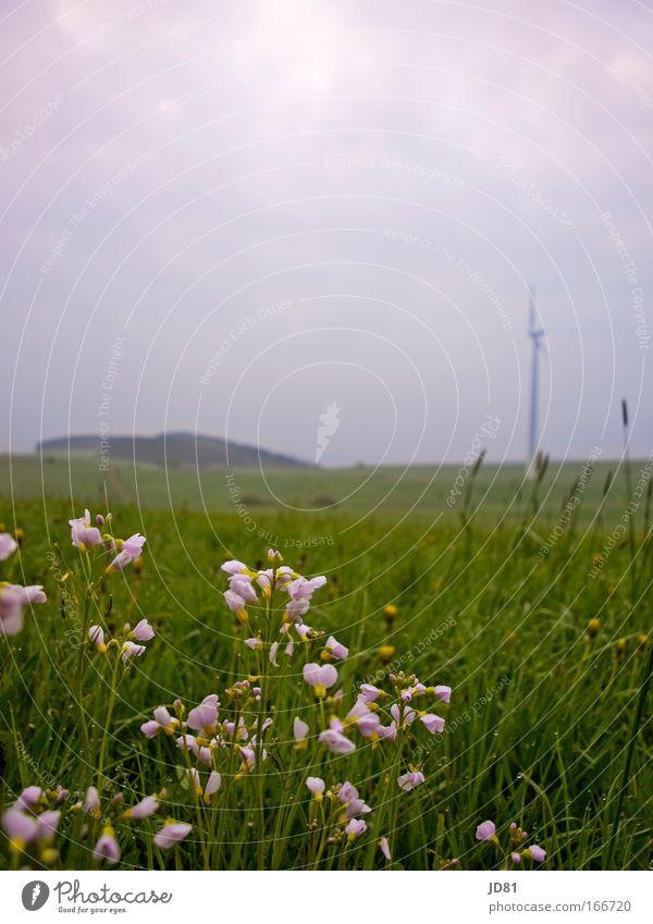 Morgenfrische Farbfoto mehrfarbig Außenaufnahme Nahaufnahme Menschenleer Textfreiraum oben Froschperspektive Umwelt Natur Landschaft Frühling Wetter Pflanze