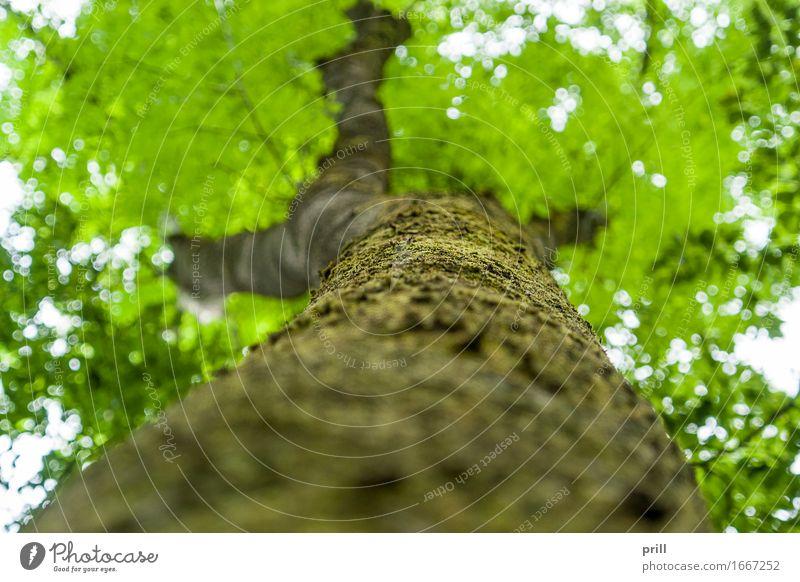 bottom up tree Natur Pflanze Frühling Baum Moos Blatt Wald Holz unten grün flachwinkel stamm Baumstamm Baumrinde Kruste Ast Zweig bildschärfe boden