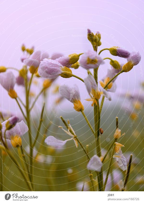 Frühlingserwachen Natur Blume grün Pflanze Tier gelb Frühling Feld Wetter frisch ästhetisch violett Käfer Frühlingsblume Frühlingsfarbe
