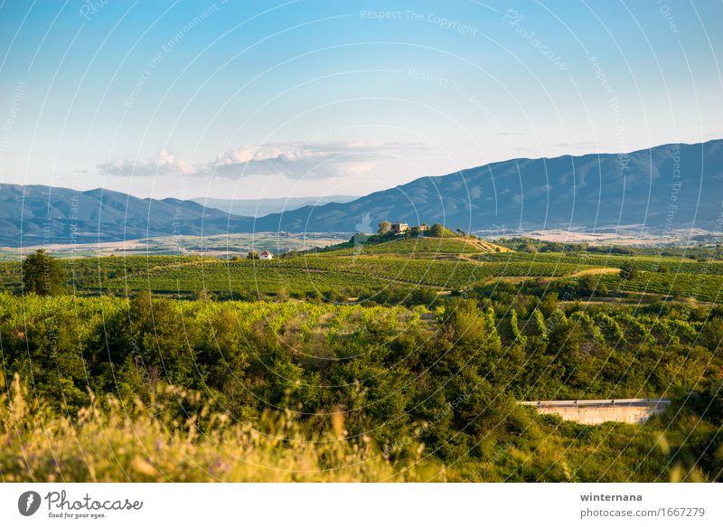 Feld des zukünftigen Weins Umwelt Natur Landschaft Himmel Wolken Horizont Frühling Sommer Schönes Wetter Garten Hügel Dorf Optimismus Warmherzigkeit Frieden