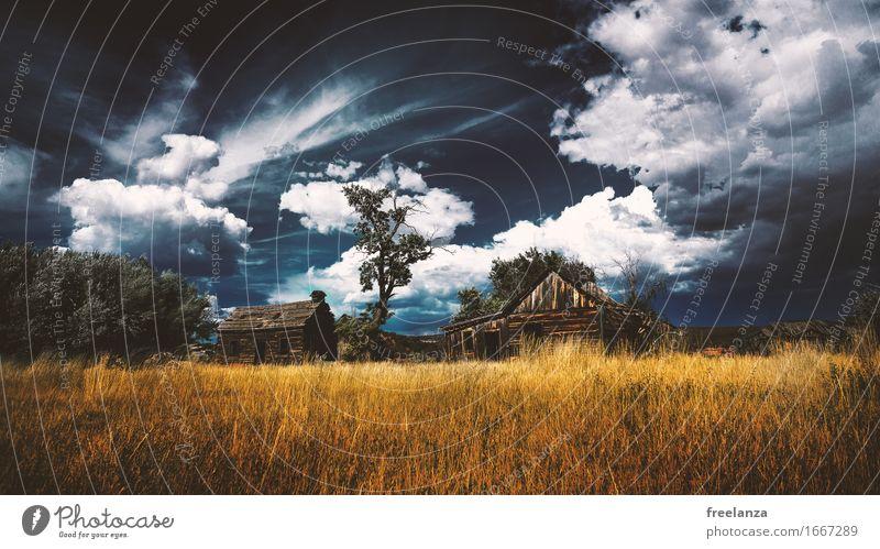 Stürmische Hütte Landschaft Himmel Wolken Gewitterwolken Herbst Gras Wiese Feld Menschenleer Dach Holz blau braun gelb gold Abenteuer Baum Farbfoto