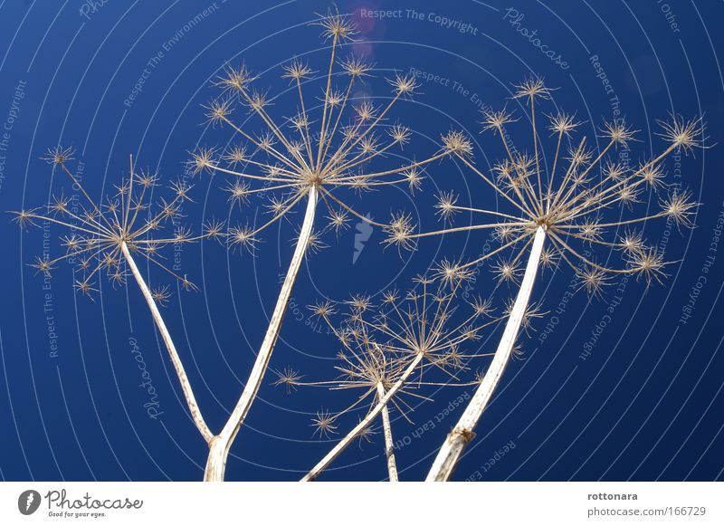 Stelle nel blu Natur Himmel blau Pflanze Winter Wiese Gefühle Tod Glück grau Erde Feld Design Umwelt hoch Perspektive