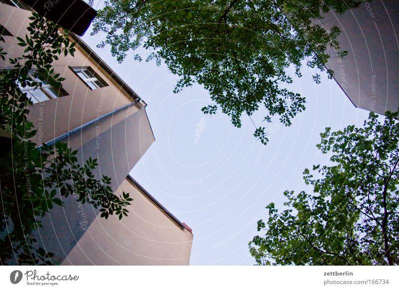 Friedenau 8 Hinterhof Stadthaus Haus Gebäude Mauer Brandmauer Mieter Vermieter Himmel Wolken schleierwolken Cirrus Sommer grün Baum Blatt Pflanze Sauerstoff