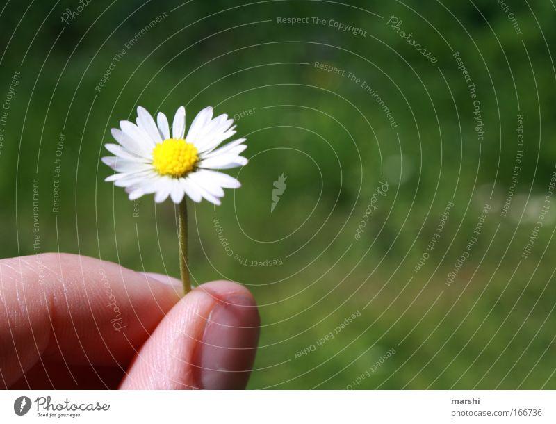 Ein Blümchen für Dich Natur schön Blume grün Pflanze Freude Wiese Gefühle Gras Glück Finger Hand Geschenk Freizeit & Hobby Blühend Duft