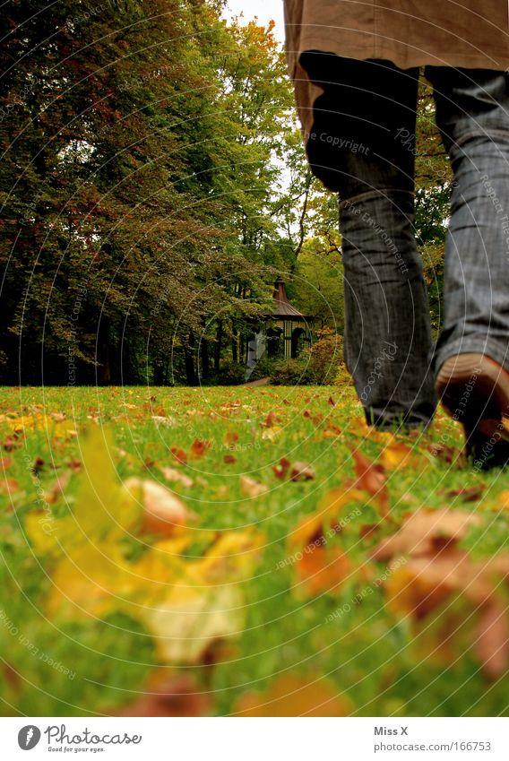 love is gone Mensch Mann Natur Blatt Erwachsene Wald Herbst Wiese kalt Gras Wege & Pfade Traurigkeit Beine Park Fuß gehen