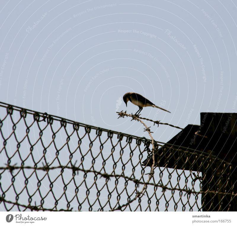Vogelfrei Himmel blau Einsamkeit Tier dunkel kalt Gefühle Traurigkeit Kraft Vogel Umwelt frei Macht gefährlich bedrohlich Unendlichkeit