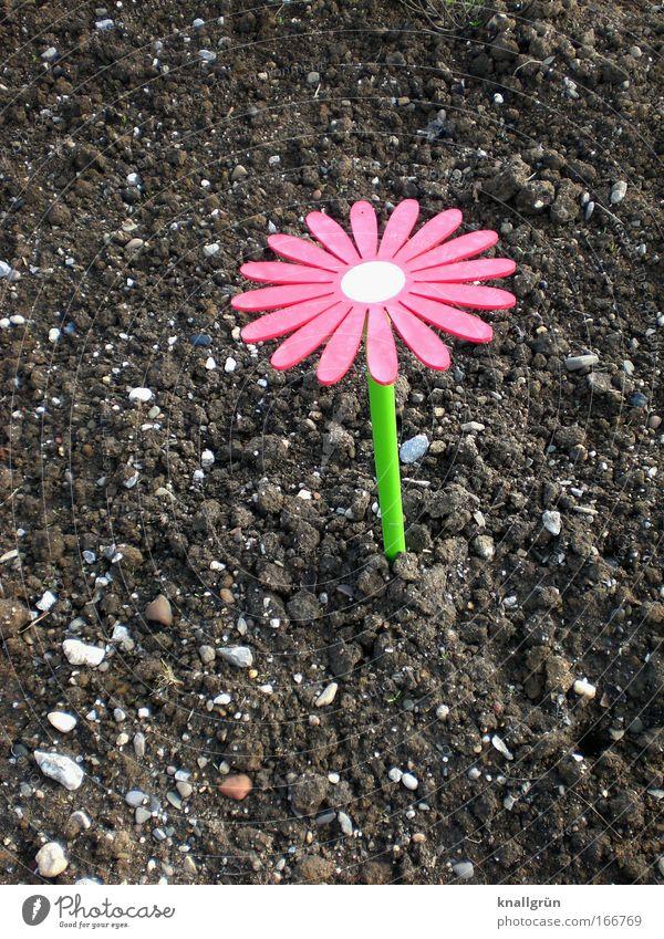 FlowerPower Natur schön Blume grün Pflanze Holz braun rosa einzigartig Blühend
