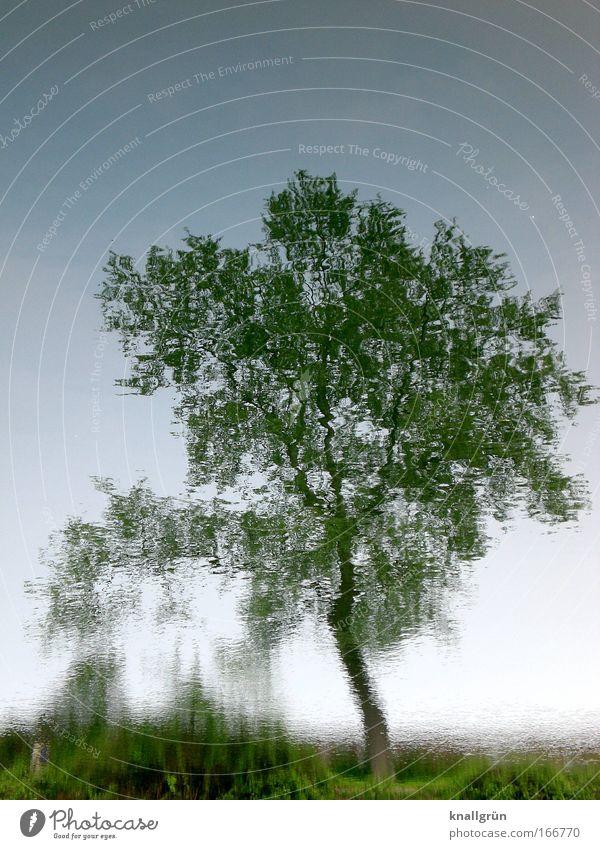 Stilles Wasser Natur Baum grün blau Pflanze Sommer braun natürlich