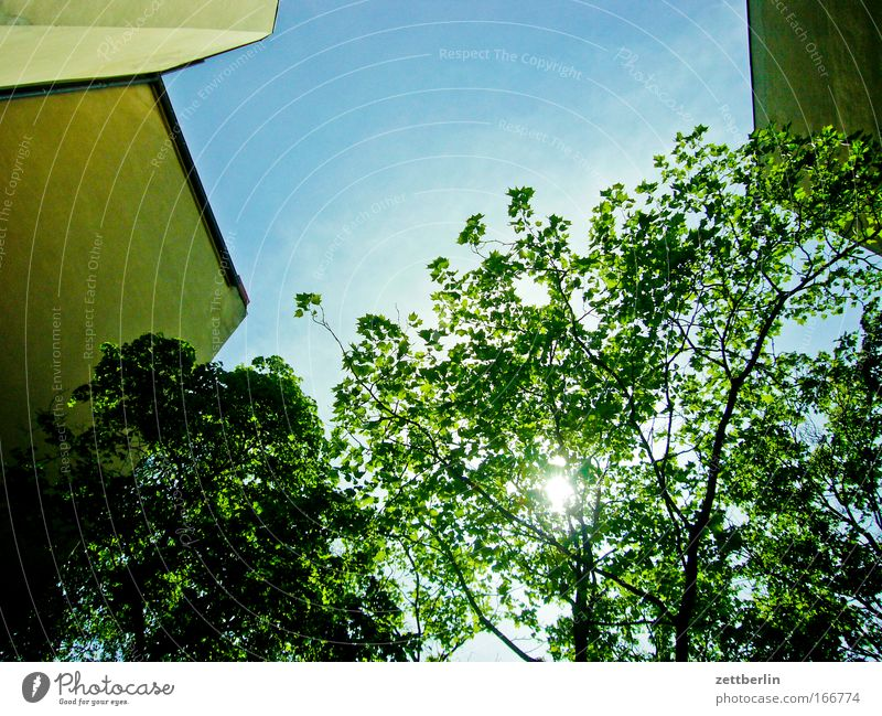 Friedenau X Himmel Baum Sonne grün Pflanze Sommer Blatt Haus Wolken Mauer Gebäude Hinterhof hinten Mieter Stadthaus Sauerstoff