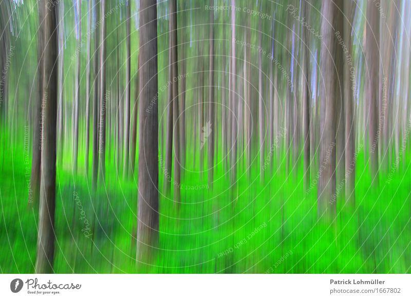 Frühlingsfarben im Schwarzwald Tourismus Freiheit Kunst Umwelt Natur Schönes Wetter Baum Gras Moos Wald Hinterzarten Baden-Württemberg Deutschland Europa