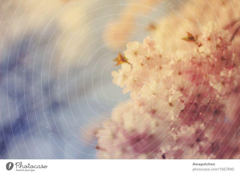 ::16-31:: Natur Ferien & Urlaub & Reisen Pflanze Sommer Baum Gesunde Ernährung Erholung ruhig Umwelt Leben Blüte Frühling Gesundheit Garten Gesundheitswesen