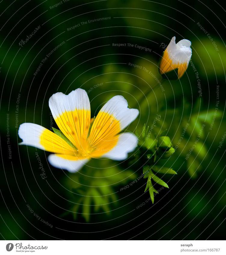 Blümchen Pflanze Blüte frisch Wachstum Dekoration & Verzierung Blühend Lebewesen Botanik Blütenknospen Gartenarbeit Staubfäden Blumenhändler Biologie geblümt