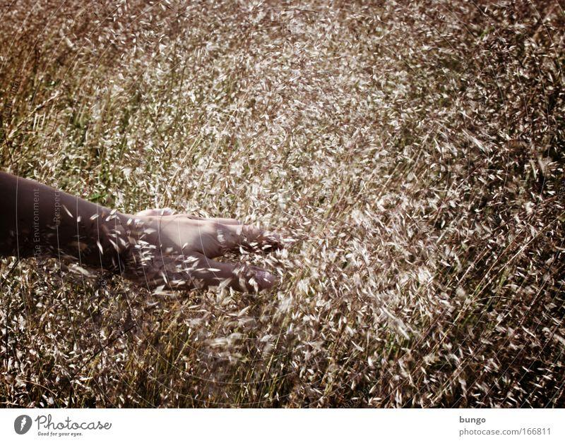 tangere Frau Natur Hand Pflanze Sommer ruhig Erwachsene Erholung Umwelt Wiese Gefühle Gras Wind Feld Arme Haut
