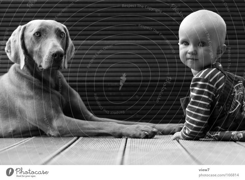 vertraulich Mensch Kind Baby Kleinkind Mädchen Familie & Verwandtschaft Kindheit Gesicht 1 0-12 Monate Terrasse Tier Hund liegen machen ästhetisch authentisch