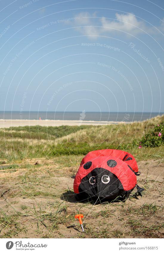invasion der riesen-marienkäfer Himmel Meer Strand Tier Landschaft Küste groß gefährlich Tiergesicht bedrohlich Punkt Spielzeug Marienkäfer Käfer Klimawandel Monster