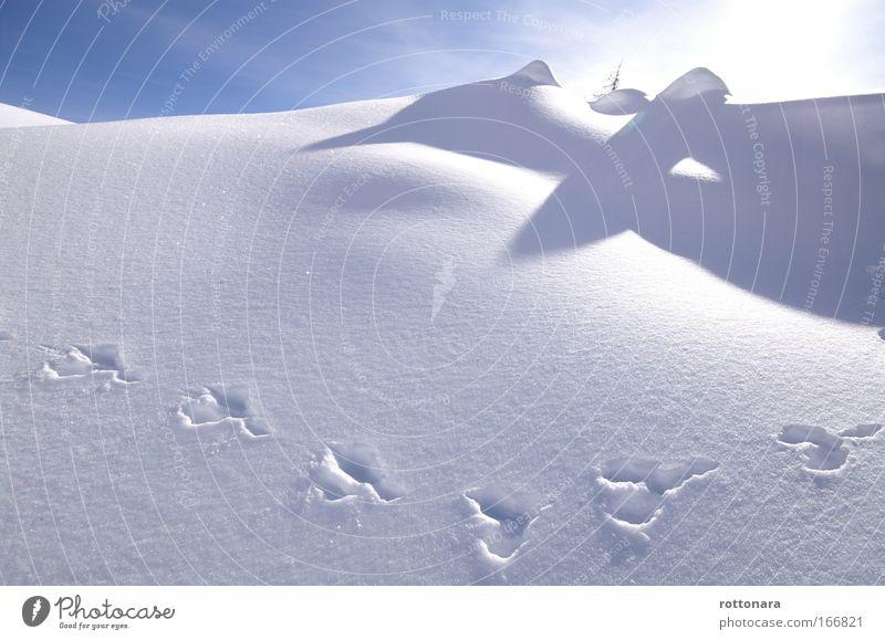 pedies frësches sön la nëi frëida Himmel Natur weiß Winter Tier kalt Schnee Berge u. Gebirge Eis Zeit gehen groß Abenteuer Frost Hügel Alpen