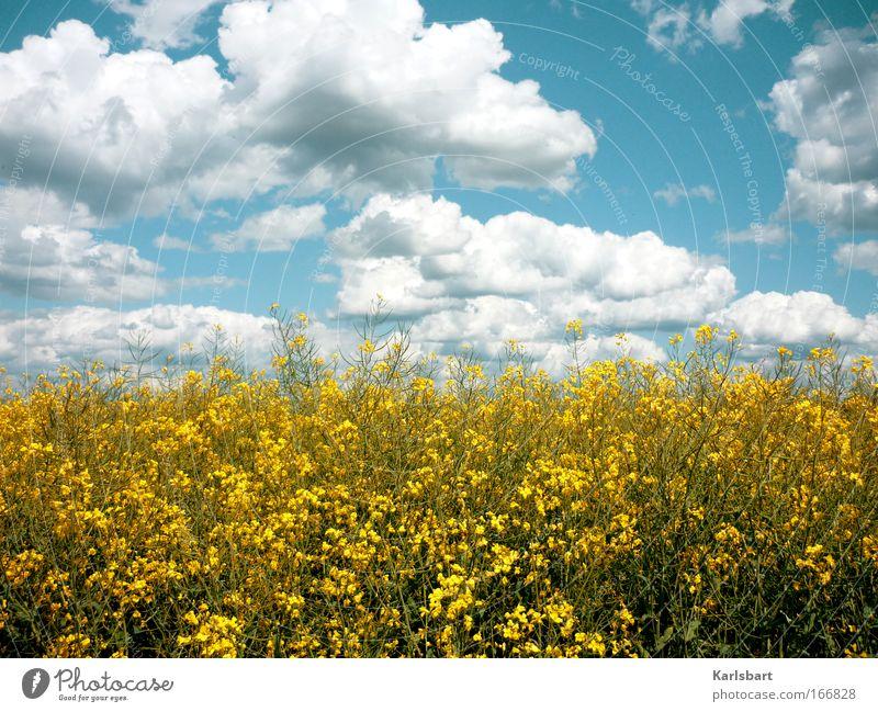 pantheism. Himmel Natur schön Ferien & Urlaub & Reisen Pflanze Sommer Wolken Umwelt Landschaft Glück Gesundheit Feld Energiewirtschaft wandern Klima Ausflug