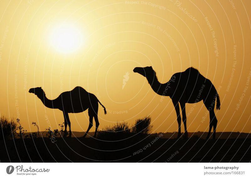 Alf laila wa-laila Farbfoto Außenaufnahme Textfreiraum oben Textfreiraum unten Abend Dämmerung Kontrast Silhouette Lichterscheinung Sonnenlicht Sonnenstrahlen