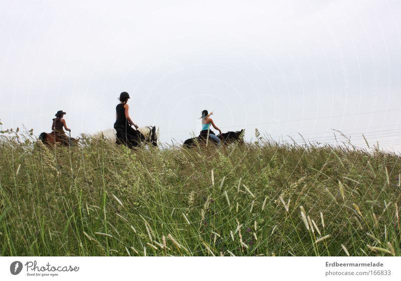 Da hinten ist die Sonne! Mensch Natur Jugendliche Sommer Freude Tier Erwachsene Umwelt Wiese Landschaft Freiheit Bewegung Glück Menschengruppe Freundschaft