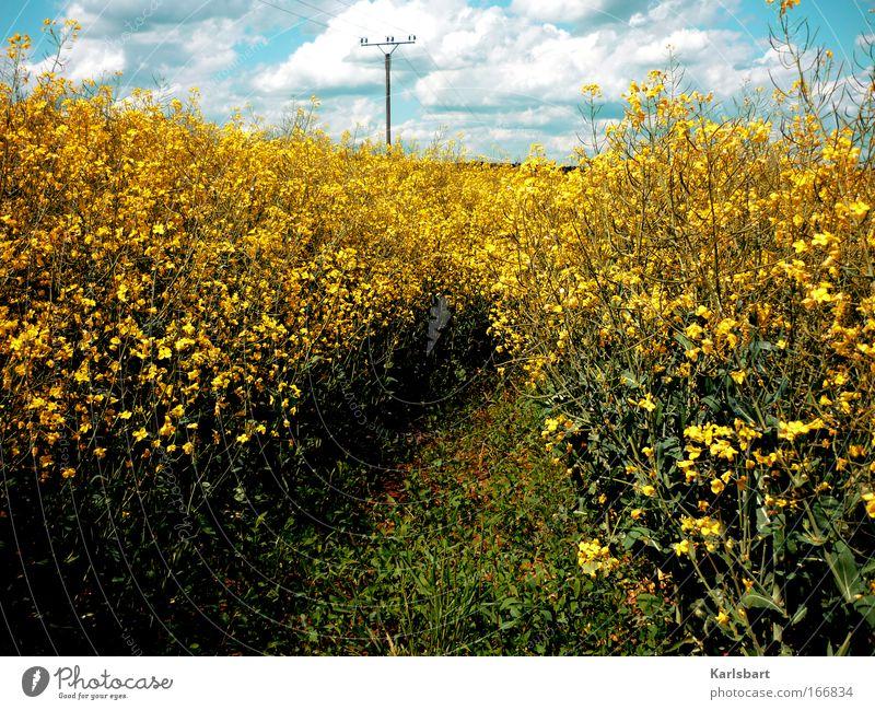 energy. Himmel Natur Pflanze Sommer ruhig Wolken gelb Freiheit Blüte Landschaft Wege & Pfade Umwelt Kraft Feld groß Energie
