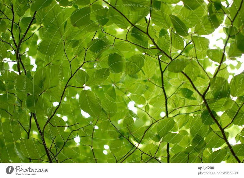 Blattsalat Himmel Natur grün schön schwarz Wärme Frühling braun frisch wandern ästhetisch nachhaltig Wildpflanze