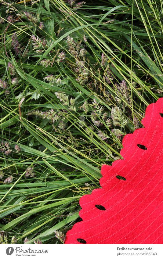 Es grünt so grün Farbfoto mehrfarbig Außenaufnahme Detailaufnahme Vogelperspektive Ausflug Sommer Natur Pflanze Schönes Wetter Gras Sträucher Wiese genießen