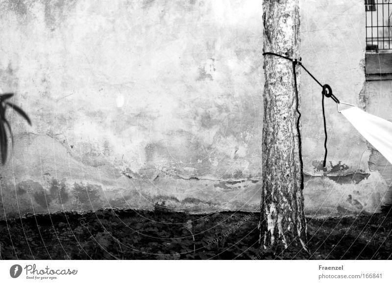 Oasenchill Schwarzweißfoto Außenaufnahme Menschenleer Tag Pflanze Baum Garten schaukeln schlafen tragen träumen Gelassenheit Pause ruhig