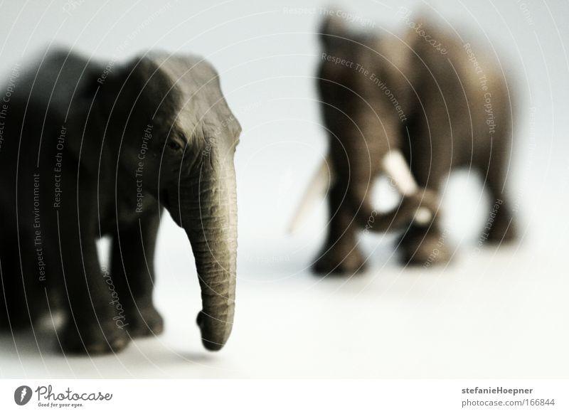 It's jungle out there Farbfoto Studioaufnahme Textfreiraum rechts Textfreiraum unten Schwache Tiefenschärfe Umwelt Natur Klima Klimawandel Tier Wildtier Elefant