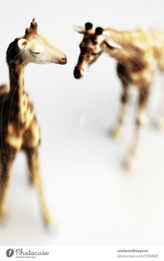 It's jungle out there Natur weiß Tier gelb Freundschaft Zufriedenheit braun Zusammensein Tierpaar Umwelt Sicherheit paarweise Kommunizieren Klima Schutz