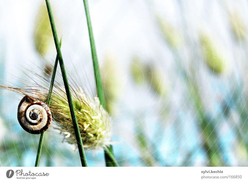 gipfelstürmer Himmel Meer Pflanze ruhig Einsamkeit Erholung Herbst Blüte Gras Freiheit Küste warten Erfolg hoch Frieden Klettern