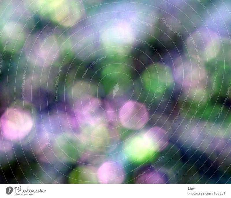 geträumt grün blau Sommer Frühling träumen Fröhlichkeit violett unklar Lichtpunkt Blendenfleck Farbenspiel Traumwelt Blendeneffekt