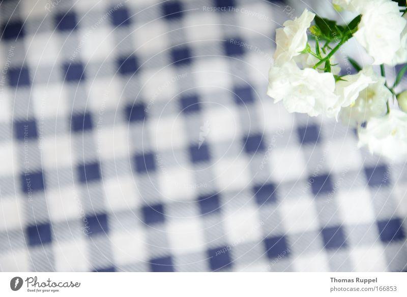Karoblüten Farbfoto Menschenleer Textfreiraum links Vogelperspektive Pflanze Blume Blüte Grünpflanze Topfpflanze blau grün weiß Muster kariert Tischwäsche Tag