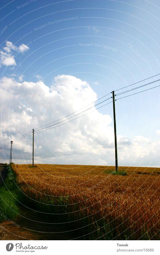 an der stromautobahn Feld Wolken Pfosten Kabel Korn Blauer Himmel