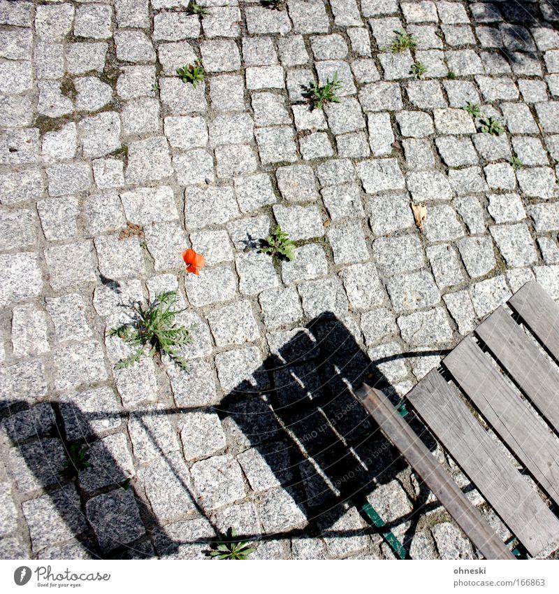 Hoffnung Blume Pflanze Erholung Stein Stuhl Löwenzahn Mohn hocken Klappstuhl Unkraut