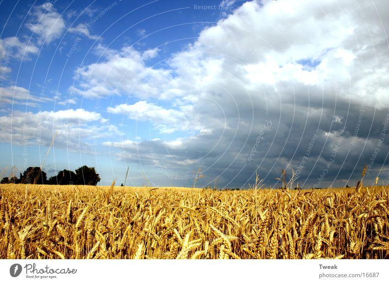 Tränen des Sommers Feld Amerika Korn Blauer Himmel Regenwolken