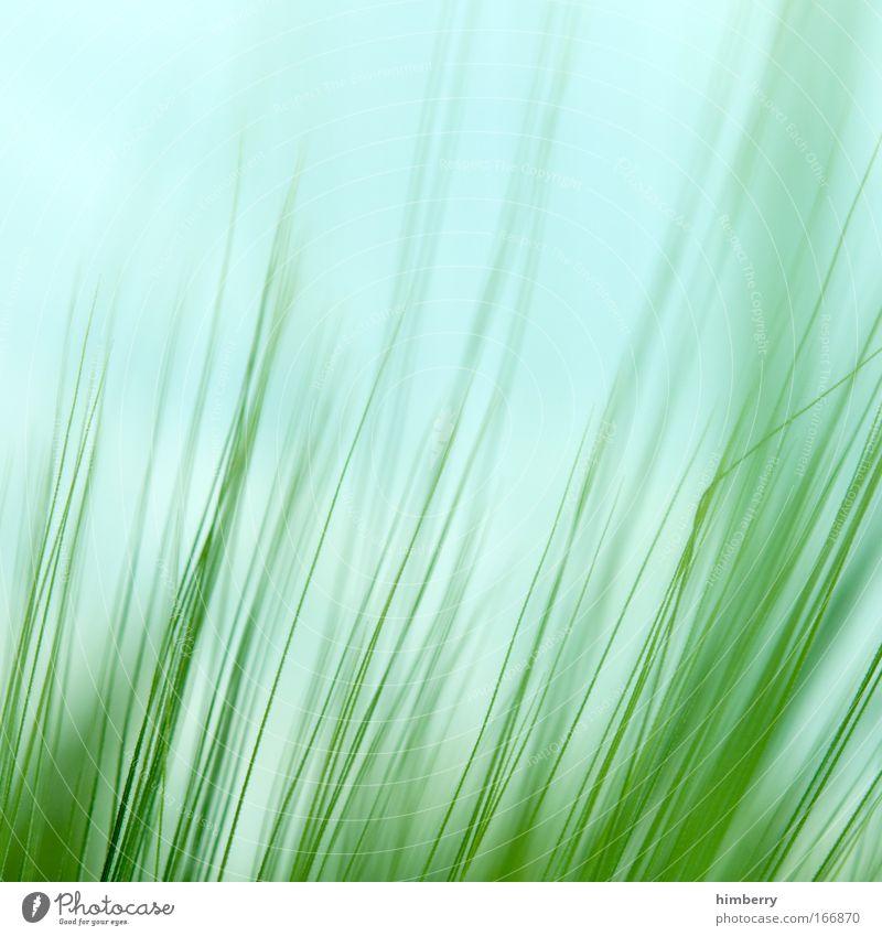 rasenmähers paradise Natur Himmel grün Pflanze ruhig Leben Erholung Wiese Stil Gras Park Zufriedenheit Feld Makroaufnahme Design Umwelt